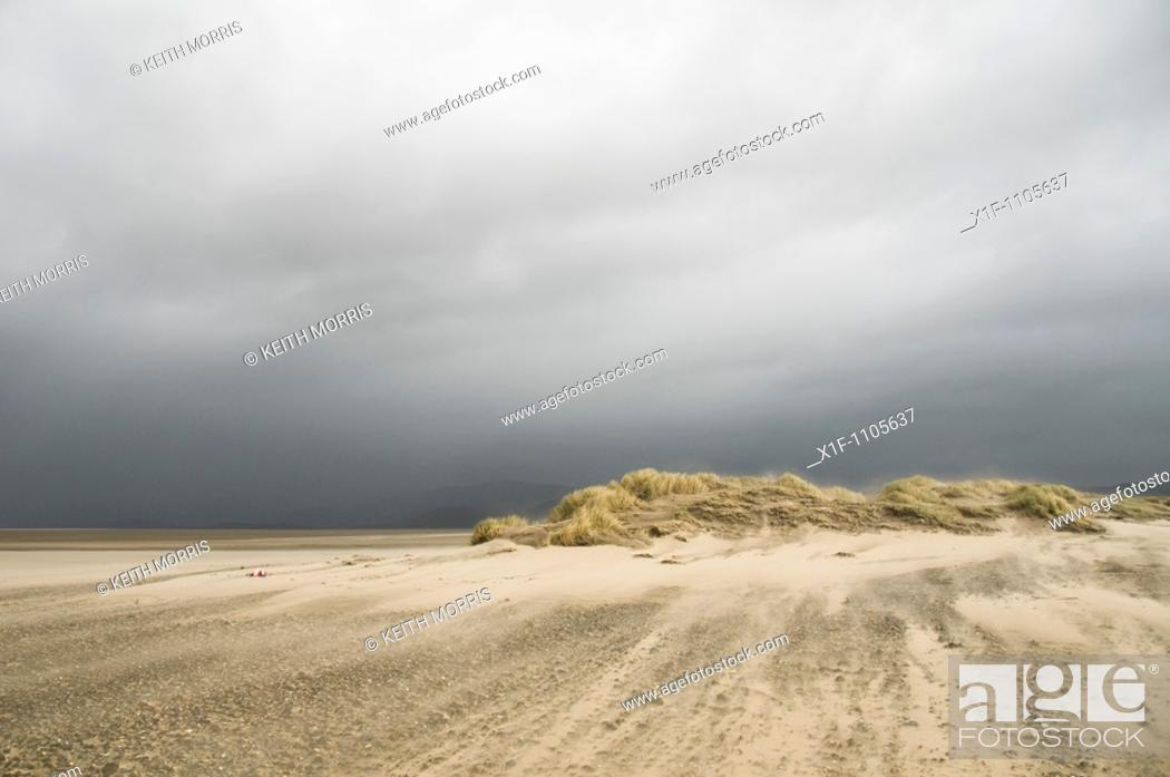 Stock Photo: Wind blowing sand , Ynyslas Nature Reserve, Borth, Ceredigion, Wales, UK.