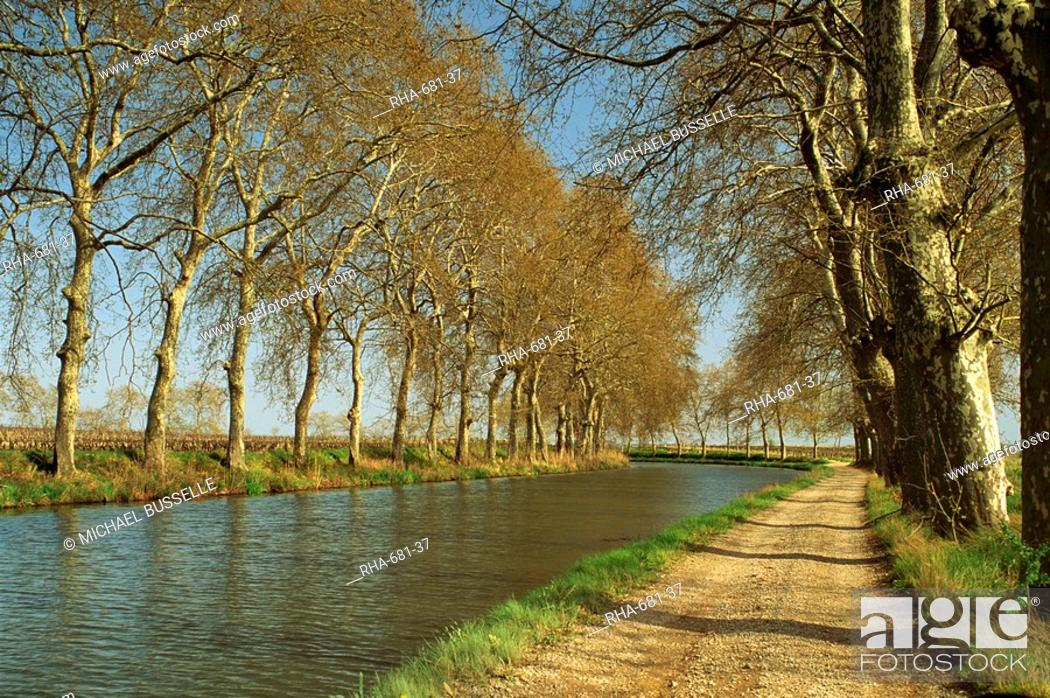 Stock Photo: Trees lining the Canal du Midi and towpath near Capestang, Languedoc Roussillon, France, Europe.