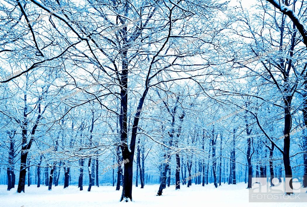 Imagen: winter trees silhouetted in snow, kent, england uk.