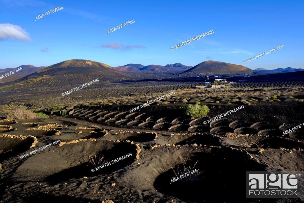 Stock Photo: Wine crops, at Yaiza, wine region La Geria, Lanzarote, Canary Islands, Spain.