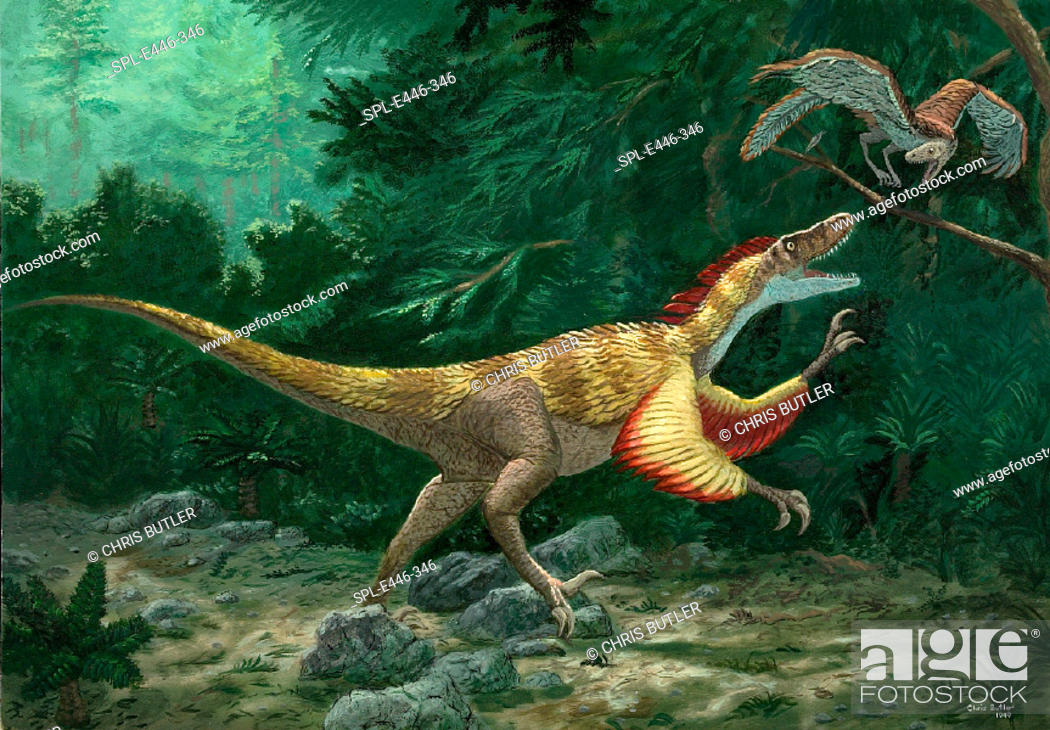 Stock Photo: Feathered dinosaurs. Conceptual artwork showing a feathered dinosaur (Velociraptor mongoliensis, centre) attacking an early ancestor of the bird.