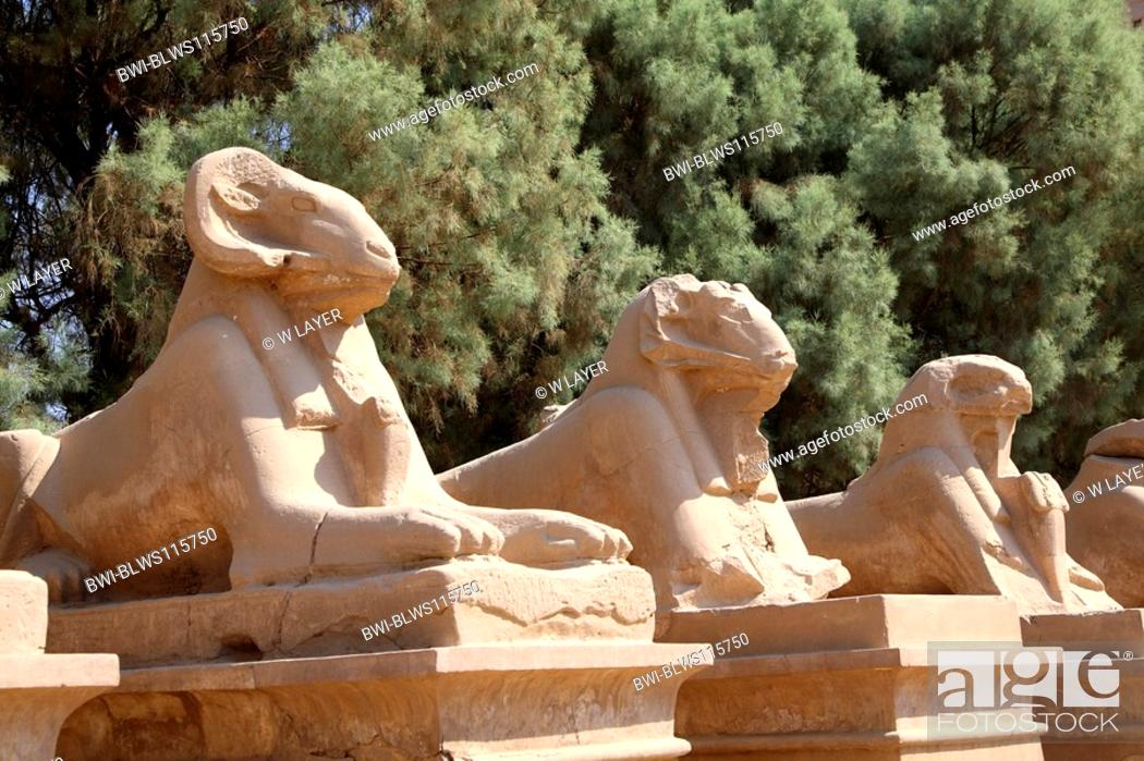 Stock Photo: ram statues in the temple of Karnak, Luxor, Egypt, Luxor.