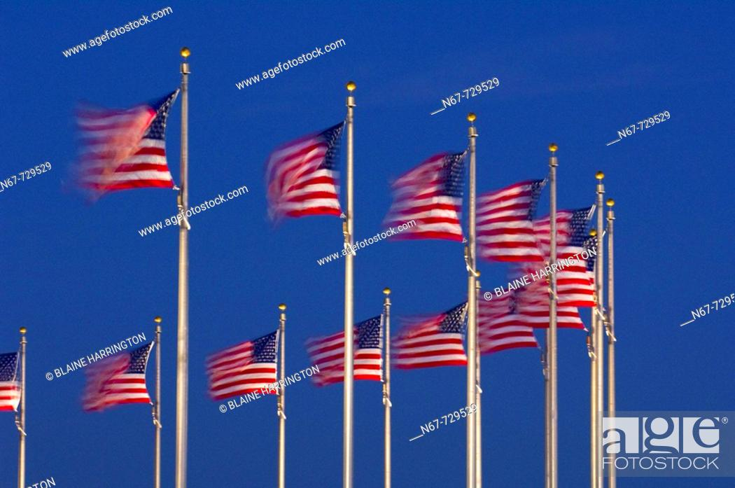 Stock Photo: A row of American flags that encircle the Washington Monument blow in predawn light, Washington D C , U S A.