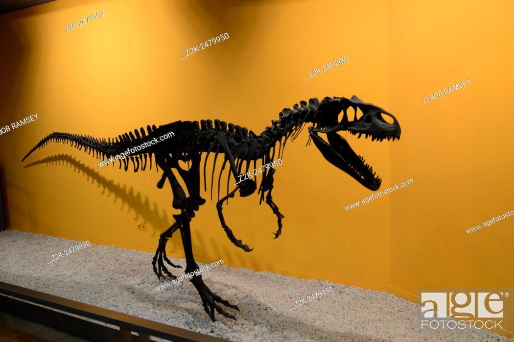 Stock Photo: Allosaurus skeletons.