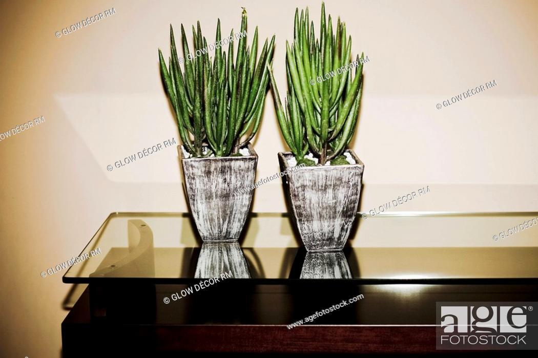 Photo de stock: Two houseplants on a table.