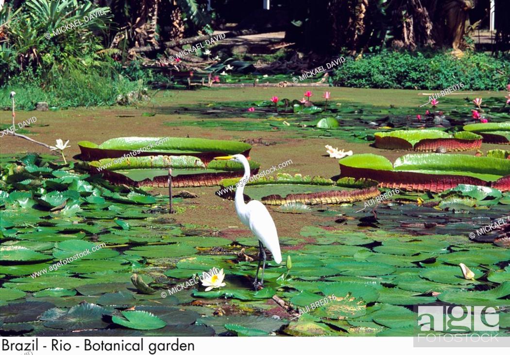 Stock Photo: Brazil - Rio - Botanical garden.