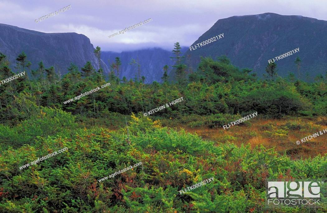 Stock Photo: Boreal Forest sphagnum bog  Black spruce, tamarack, mosses, rushes  Western Brook Pond  Gros Morne National Park, Newfoundland.