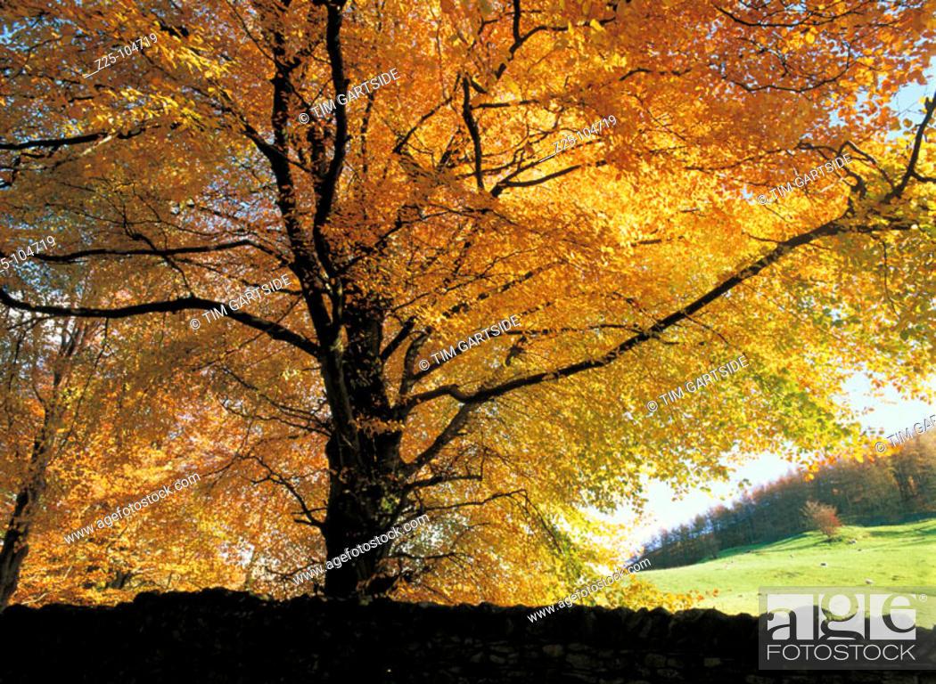 Stock Photo: Tree. Grasmere. Cumbria. England.