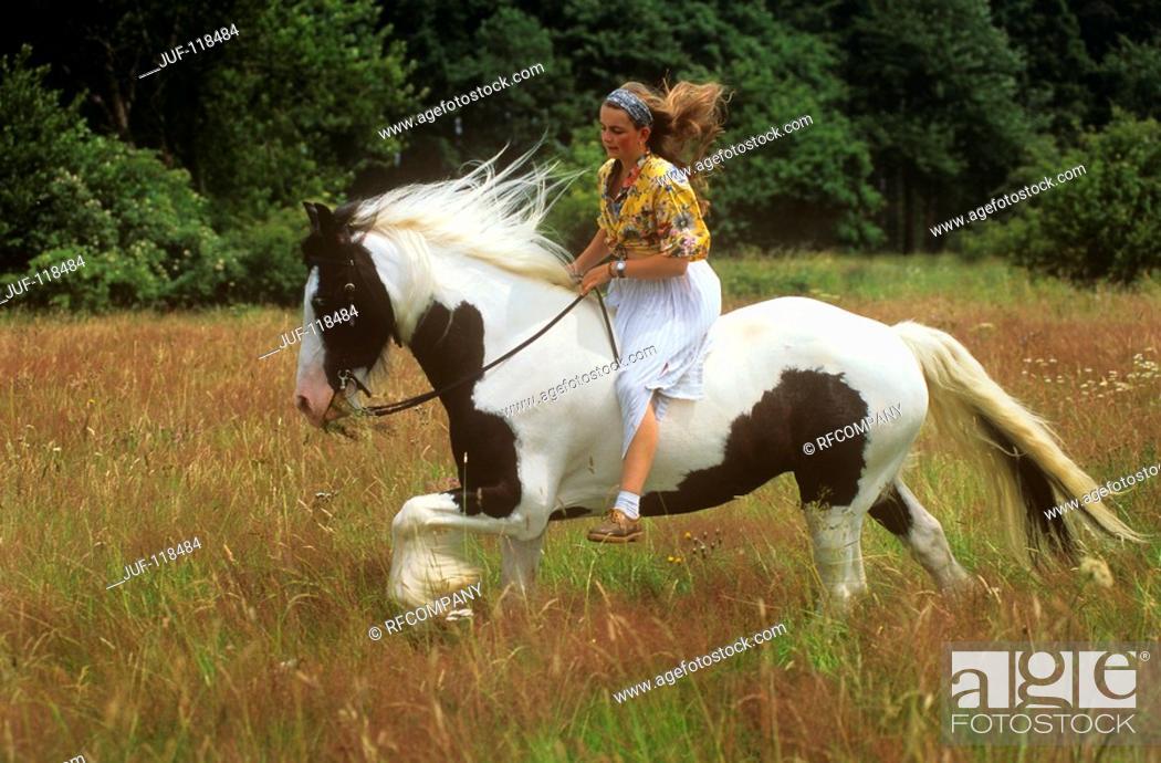 Stock Photo: Tinker Pony with rider.