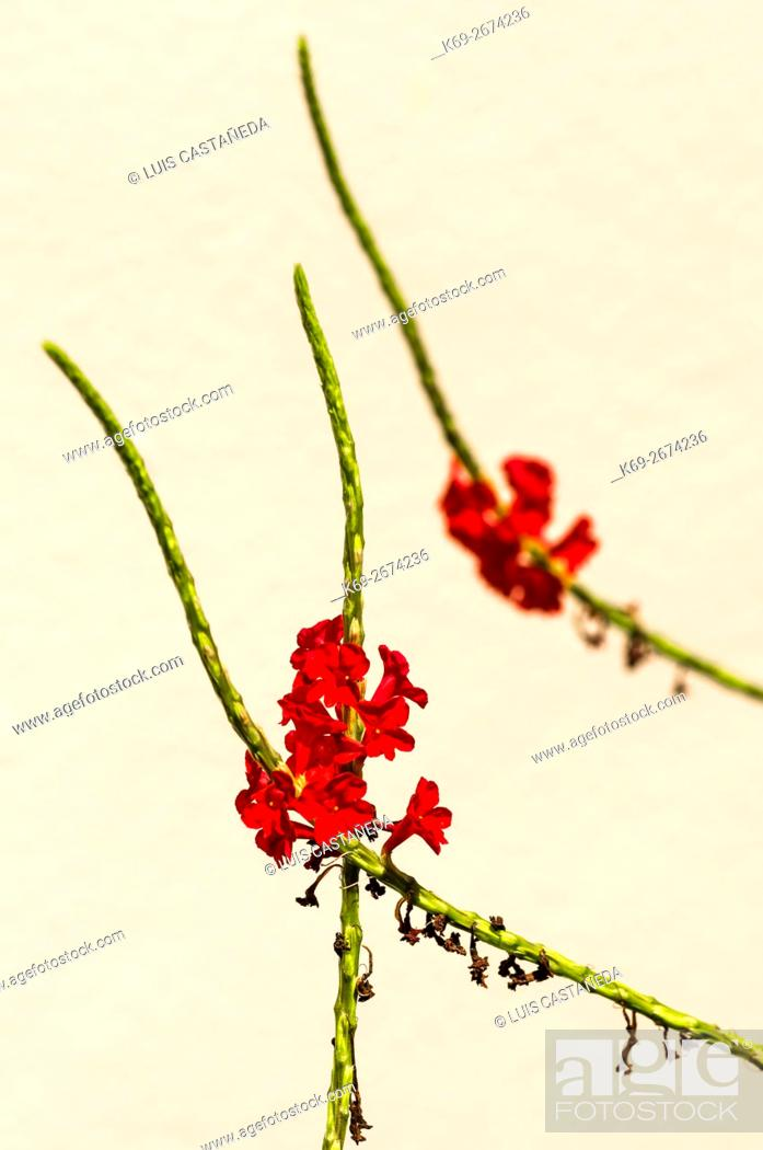 Stock Photo: Stems with Flowers.