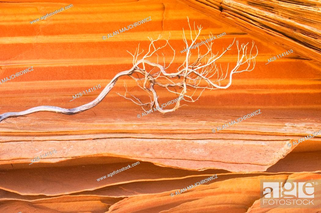 Stock Photo: Bleached branch against patterns in layered sandstone, South Coyote Buttes, Vermilion Cliffs Wilderness Utah.