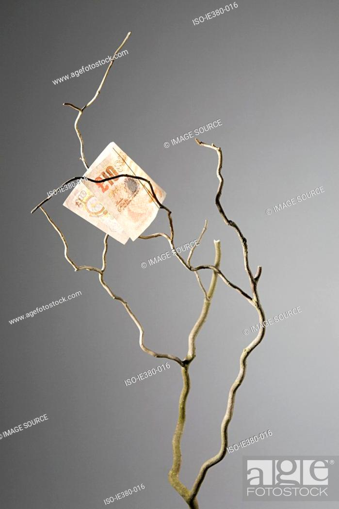 Stock Photo: Ten pound note in a tree.