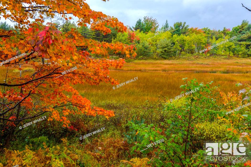 Stock Photo: Autumn along Duck Brook Road in Acadia National Park, Maine.