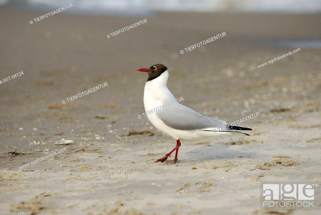 Stock Photo: gull.