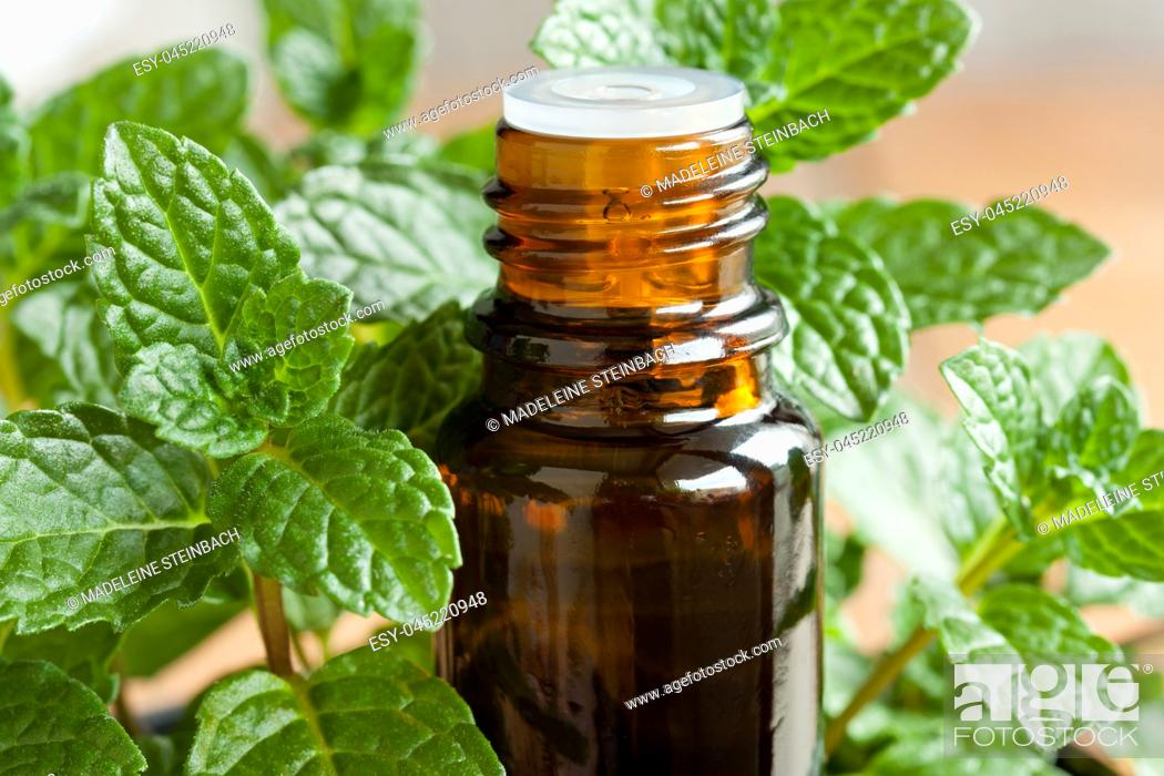 Stock Photo: A bottle of peppermint essential oil with fresh peppermint twigs in the background.