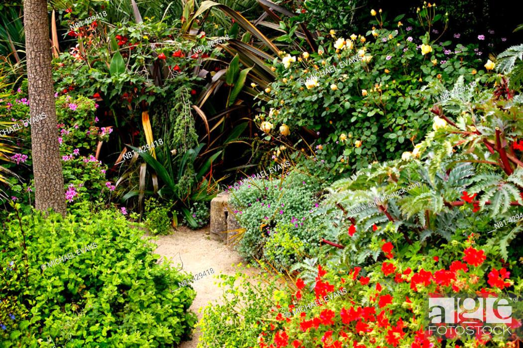 Stock Photo: Path in San Francisco Botanical Garden, San Francisco. California, USA.