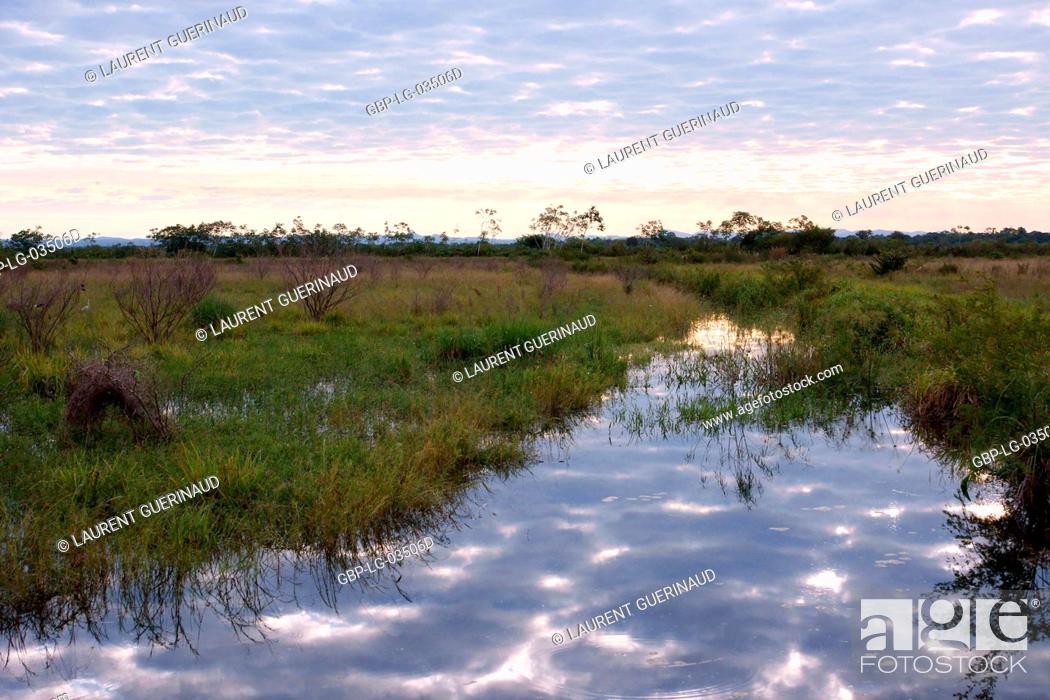 Stock Photo: Landscape, Pantanal, Mato Grosso do Sul, Brazil.