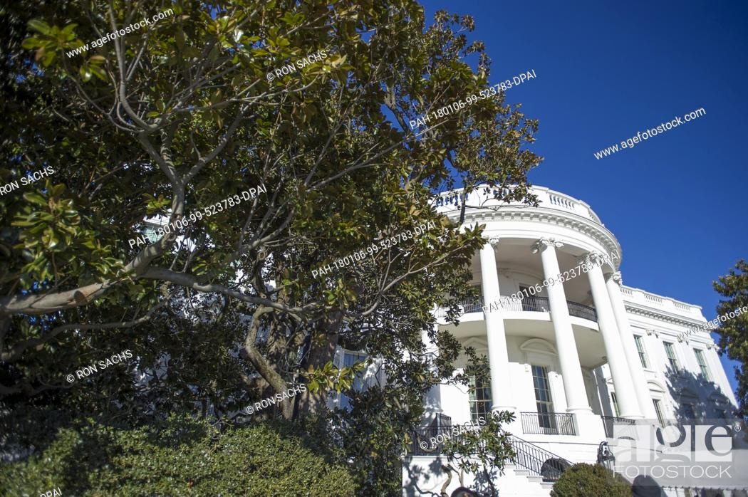 The Jackson Magnolia A Tree That Was Planted On The White House