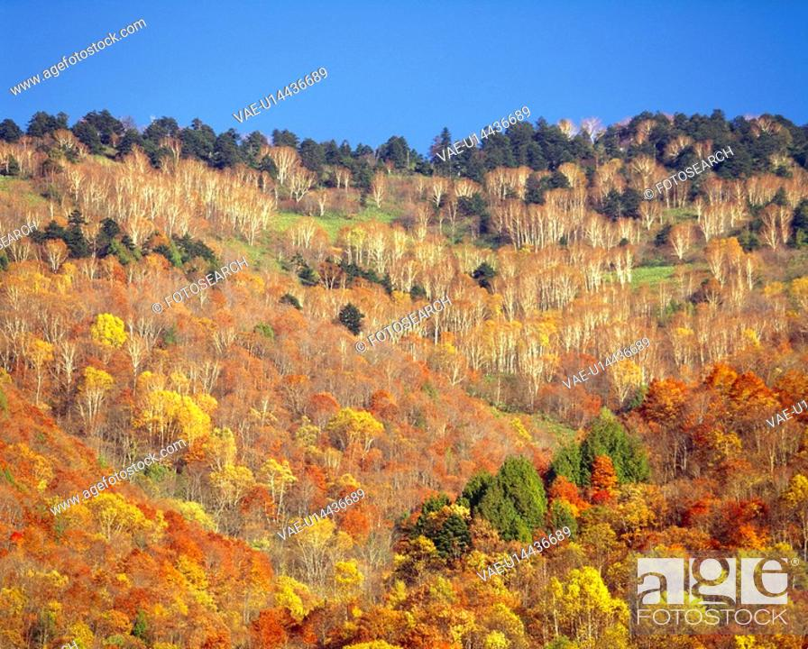 Stock Photo: Colored leaves.