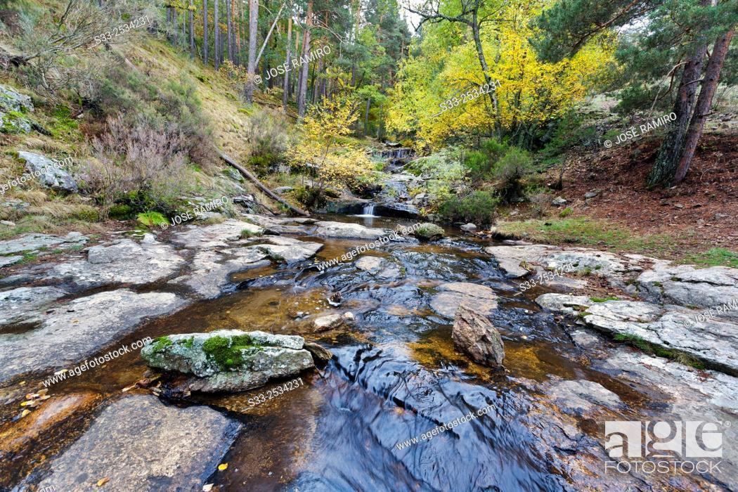 Sestil Streaml In The Canencia Birch Sierra De La Morcuera Madrid