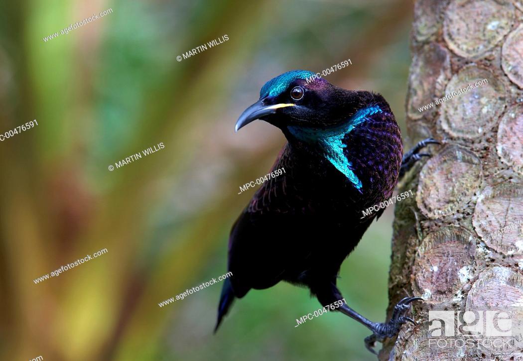riflebirds dating dansa med stjärnor val dating