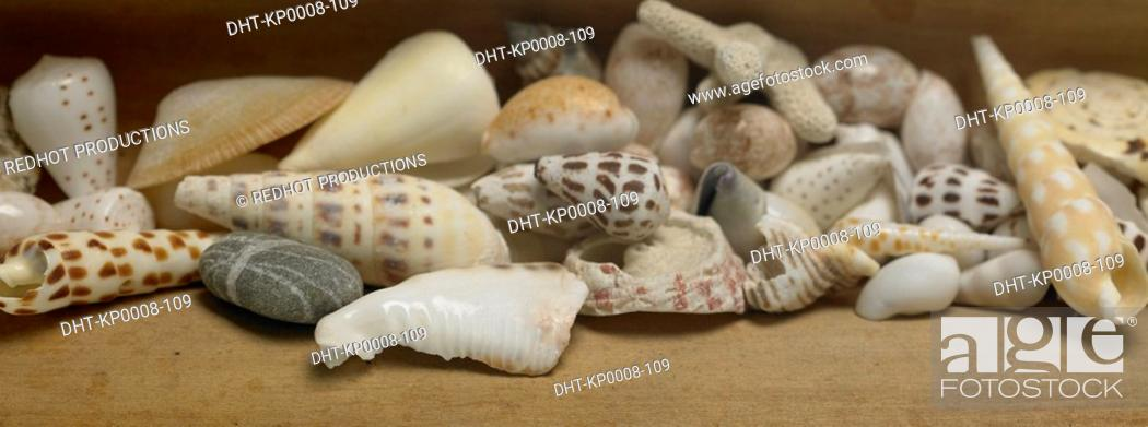 Stock Photo: Various Shells sitting on table indoors.