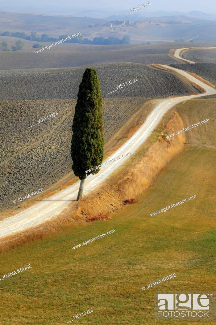 Stock Photo: view of the typical landscape of Tuscany in Val d'Orcia.