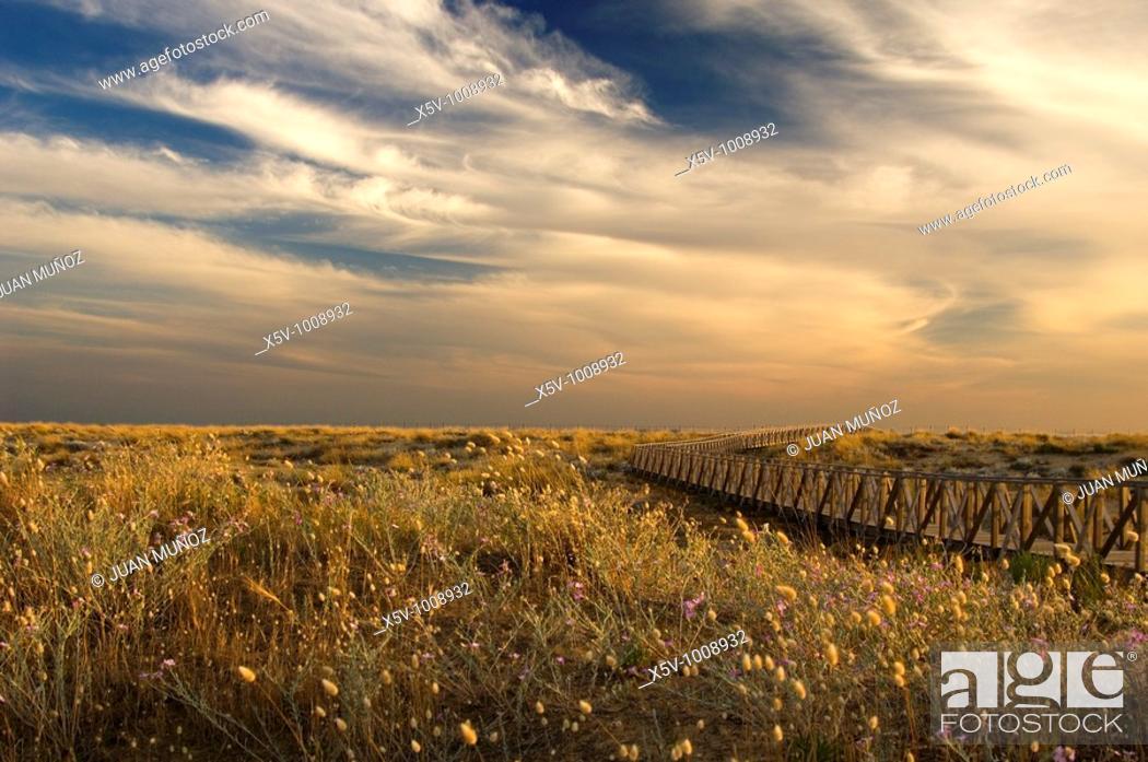 Stock Photo: Gateways to the beach. Odiel Marshes Natural Park. Biosphere Reserve. Huelva. Spain.