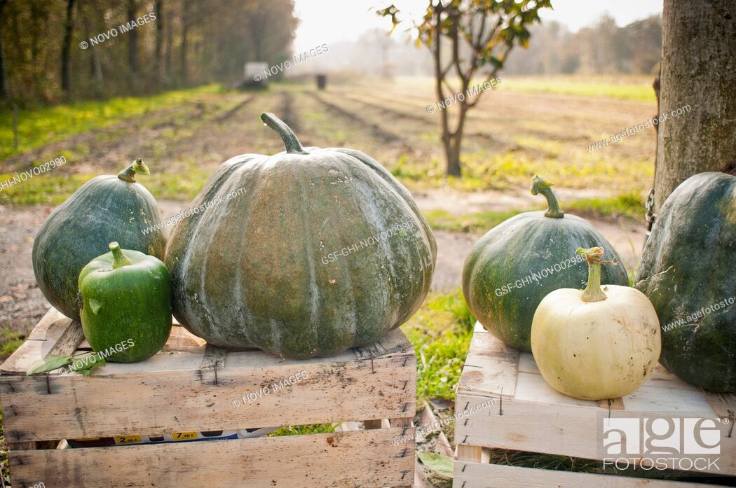 Imagen: Variety of Green Pumpkins on Wood Crates, Close-Up.