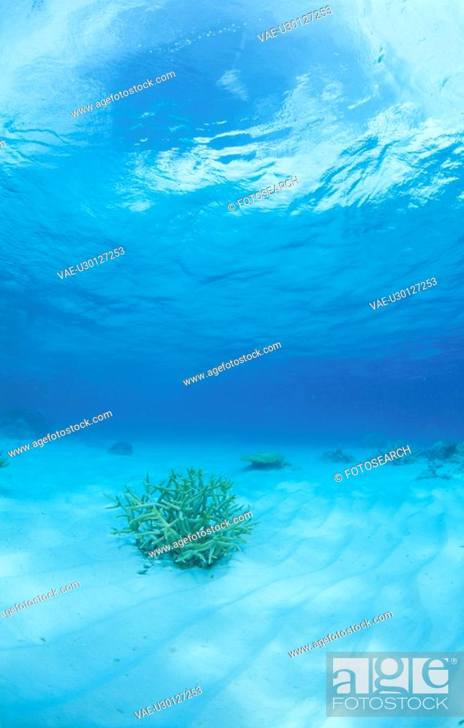 Stock Photo: Coral Which Blooms On A Submarine Desert.