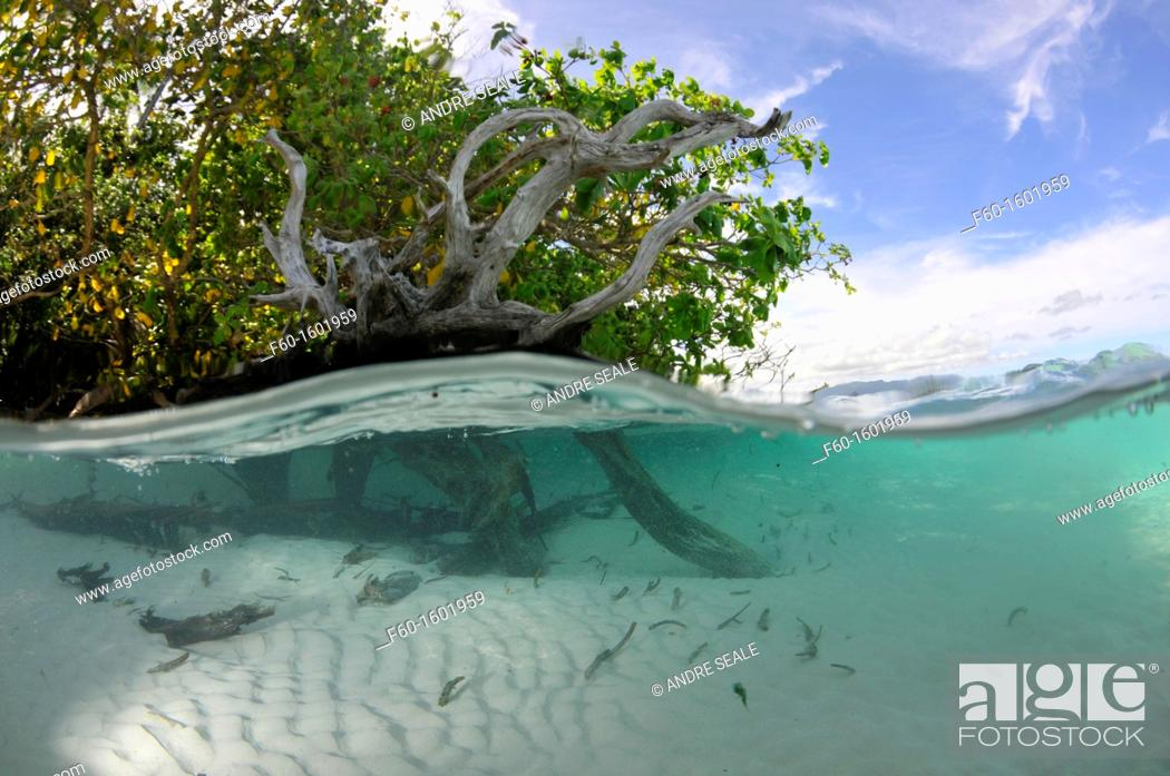 Stock Photo: Split image of mangrove and sandy bottom, Pohnpei, Federated States of Micronésia.