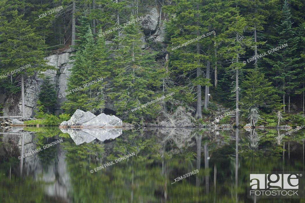 Stock Photo: Reflection of forest in Saco Lake in the White Mountains of New Hampshire.
