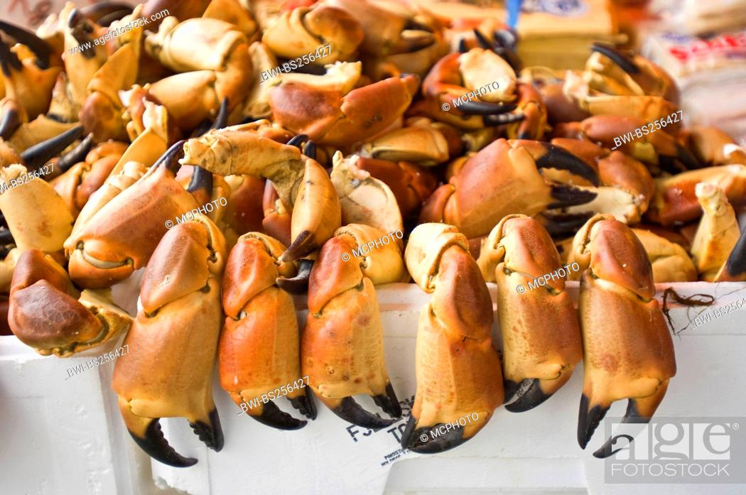 Stock Photo: crab claws at the fish market , Norway, Bergen.