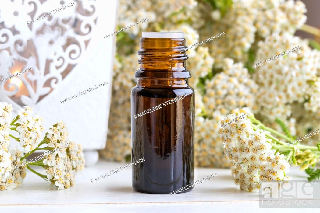 Stock Photo: A bottle of essential oil with fresh blooming yarrow plant.