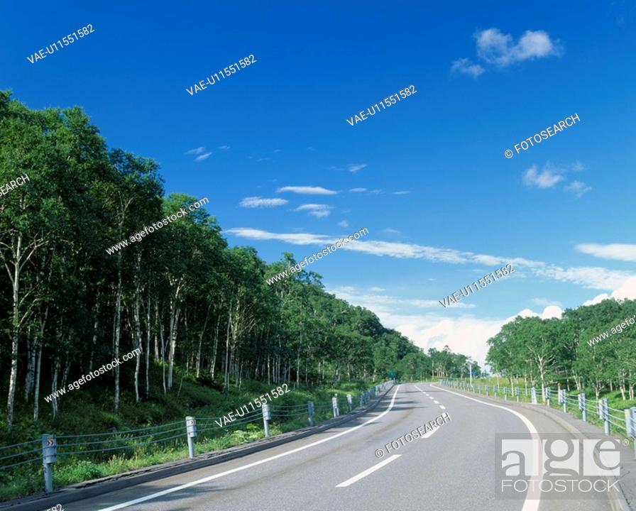 Stock Photo: A Road And A Wood.