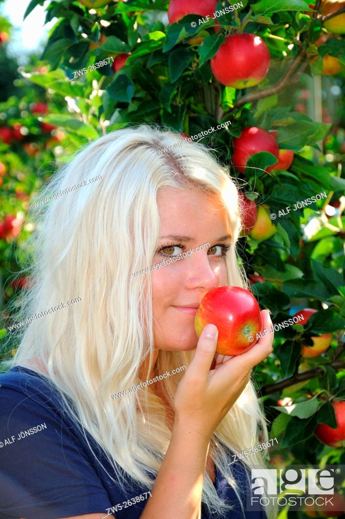 Stock Photo: Blond young woman at apple harvest in Kivik, Scania, Sweden.