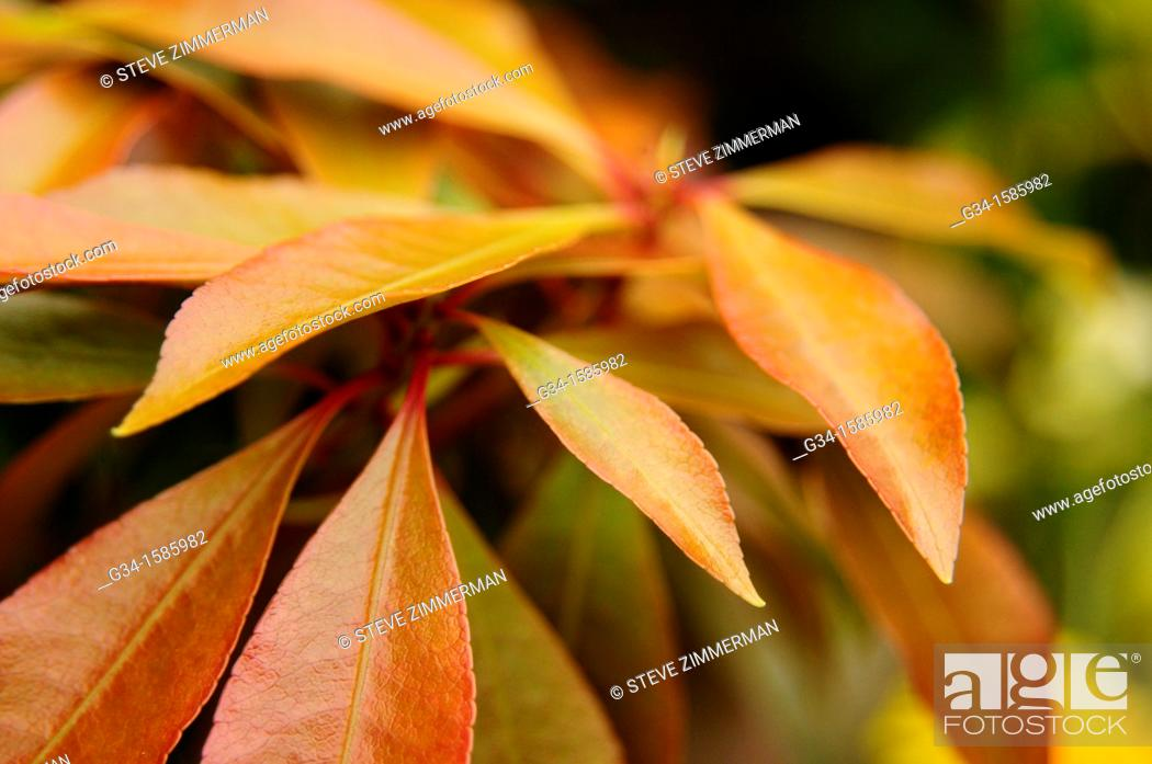 Stock Photo: Autumn Swathe.