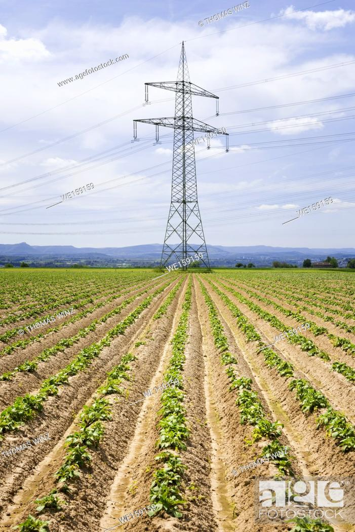 Stock Photo: Field of young potao plants and electrical transmission towers , Stuttgart, Baden Württemberg , Germany.