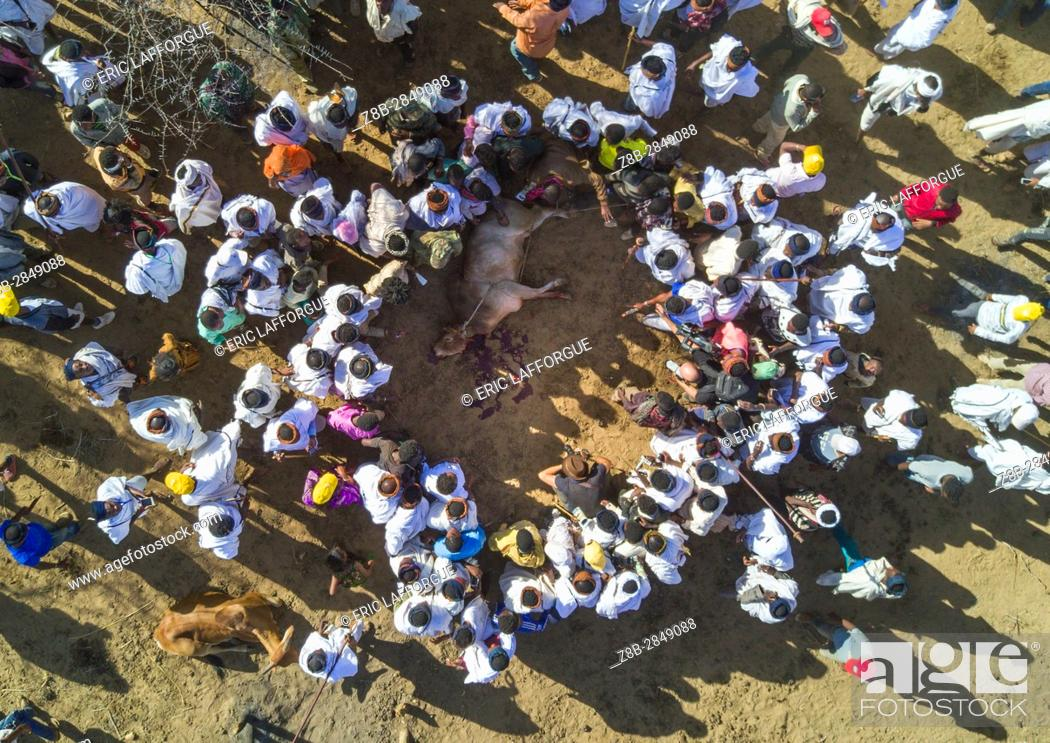 Stock Photo: Aerial view of the slaughter of a bull during the Gada system ceremony in Borana tribe, Oromia, Yabelo, Ethiopia.