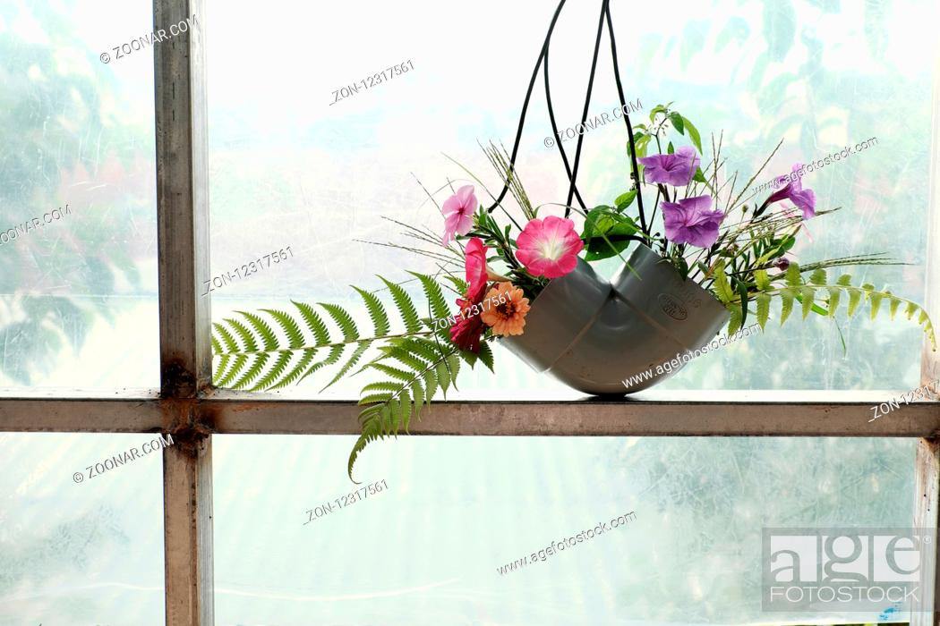 Stock Photo: Leisure activities with recycle from waste to make flower vase to decoration home, colorful daisy in water pipe on white background.
