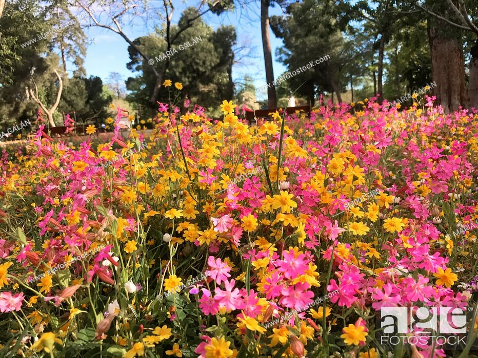 Stock Photo: Spring flowers in The Retiro park. Madrid, Spain.