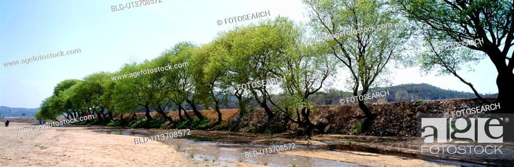 Stock Photo: season, landscape, stream, tree, scenery, spring, nature.