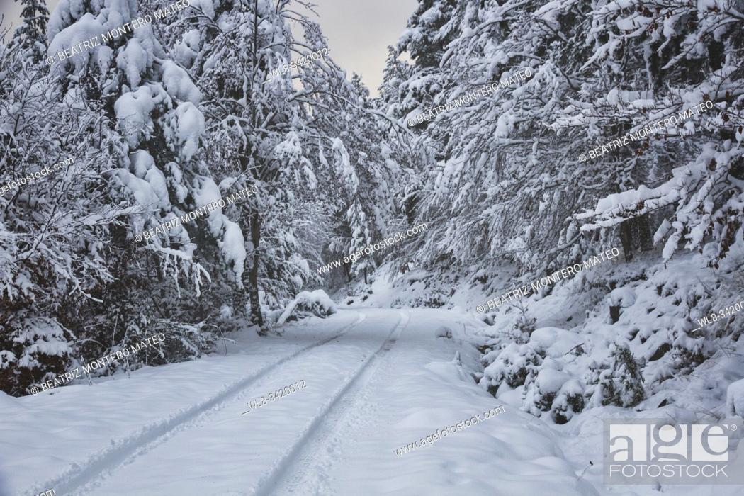 Stock Photo: Snowy road between forests in Sierra de la Demanda (Burgos, Spain).