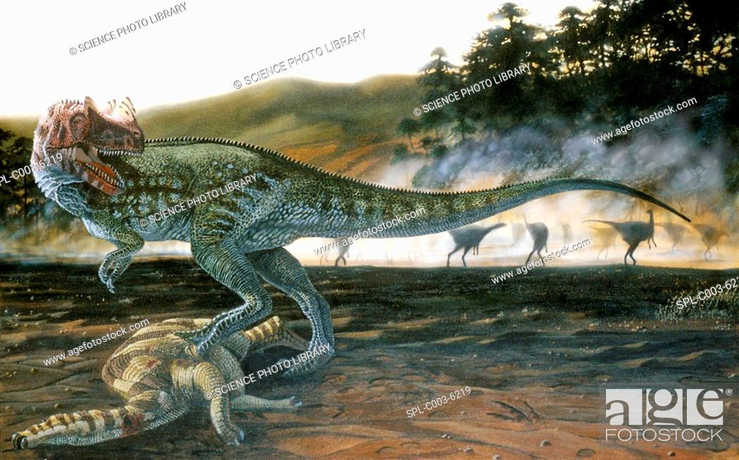 Stock Photo: Ceratosaurus dinosaur. Artwork of a Ceratosaurus Ceratosaurus nasicornis with prey. This carnivorous theropod dinosaur lived in the Late Jurassic Period 150-135.