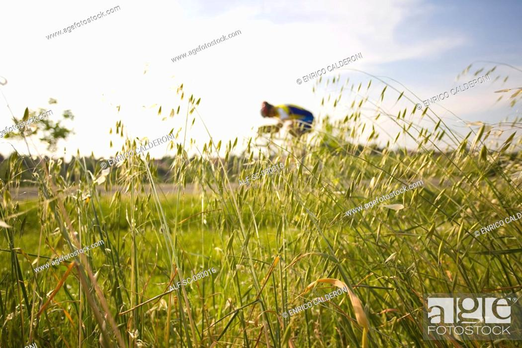 Stock Photo: Cyclist riding bicycle seen through oat field.
