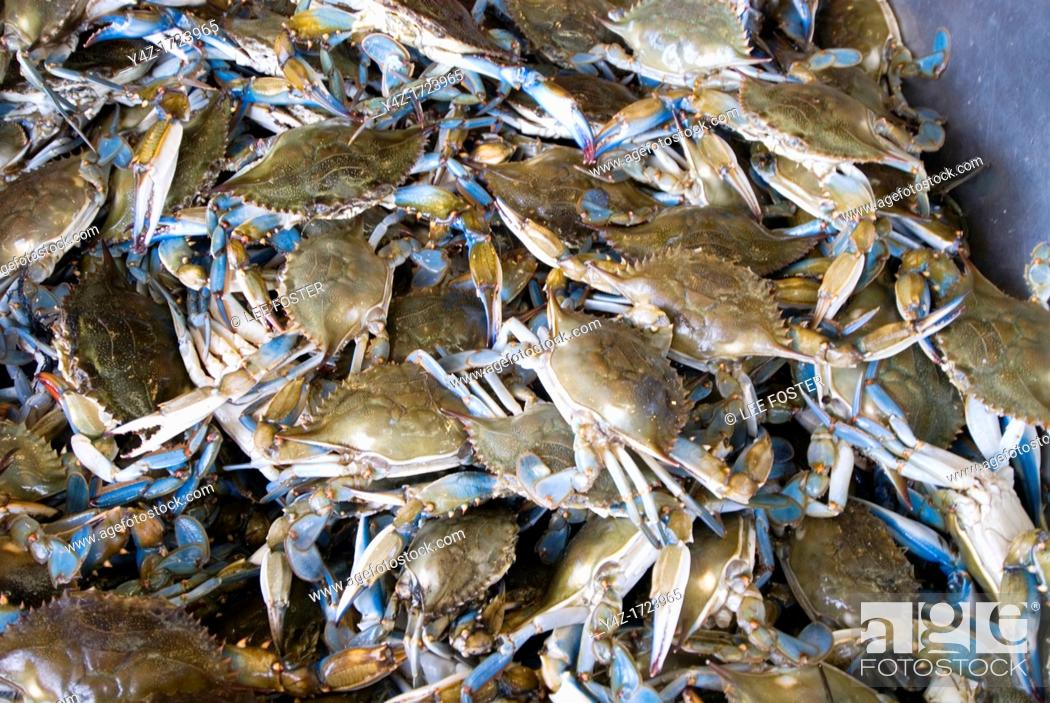 Stock Photo: Washington DC, fresh fish and shellfish market on Maine Ave, selling Chesapeake Bay blue crab and various fish, all fresh and live off the boats.