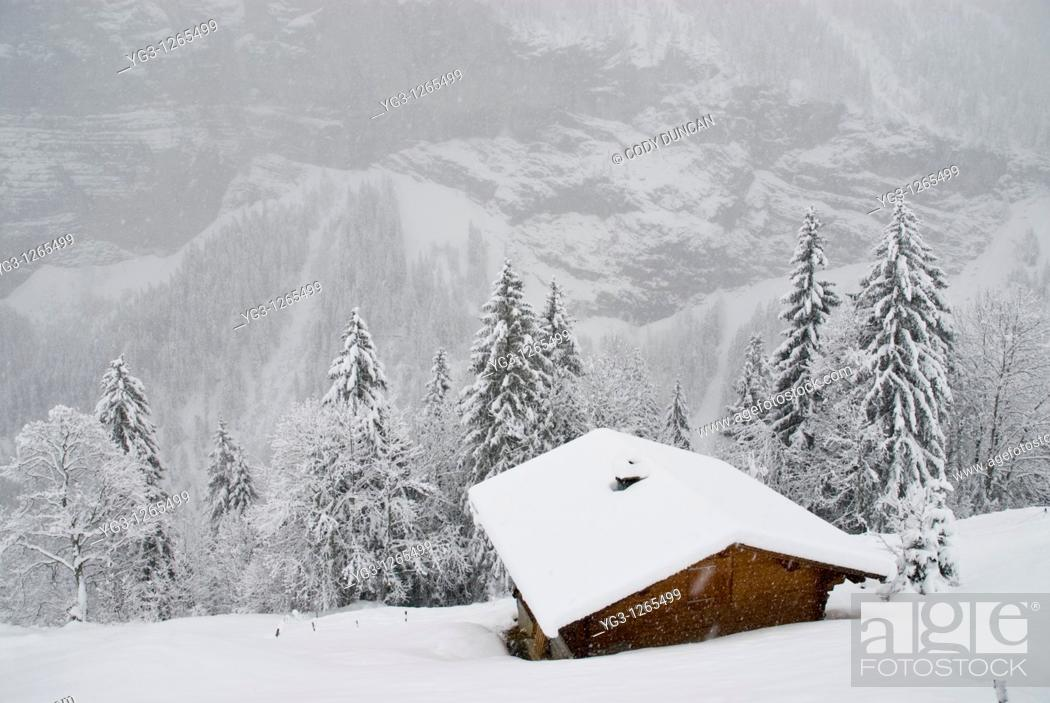 Stock Photo: Hillside cabin in snow, Gimmelwald, Bernese Oberland, Switzerland.