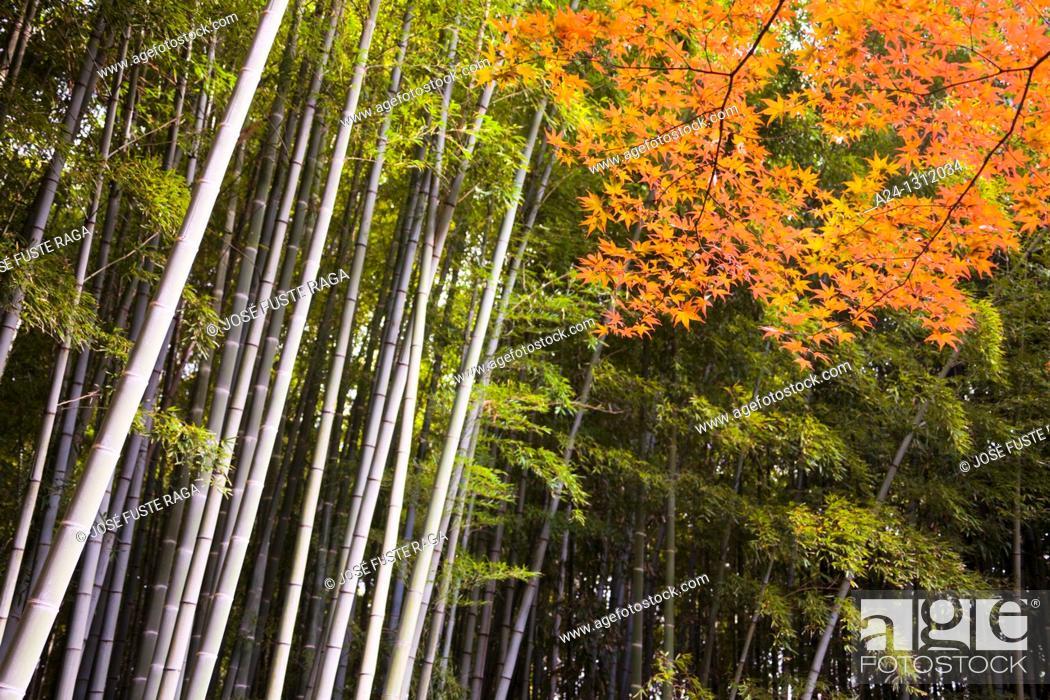 Stock Photo: Kamakura City, Bambu Wood.
