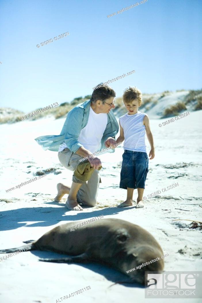 Stock Photo: Man and boy looking at seal on beach.