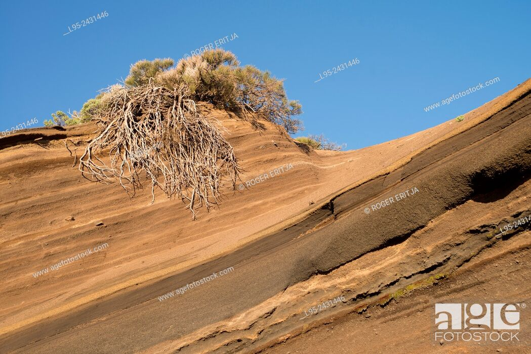 Stock Photo: Layers of lapilli and volcanic sand on the slopes of the Teide volcano, Tenerife, Canary Islands, Spain.